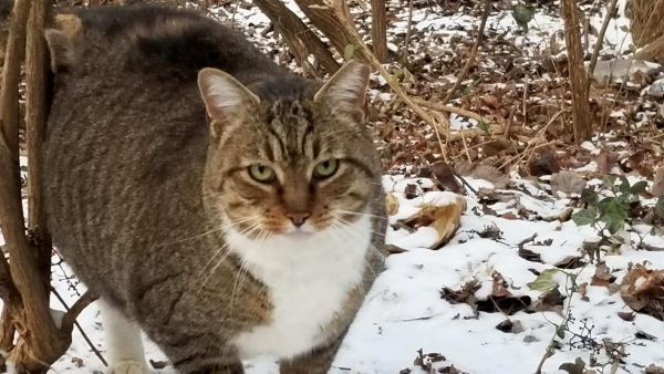 tnr-colonycat